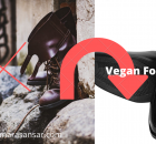 vegan footwear