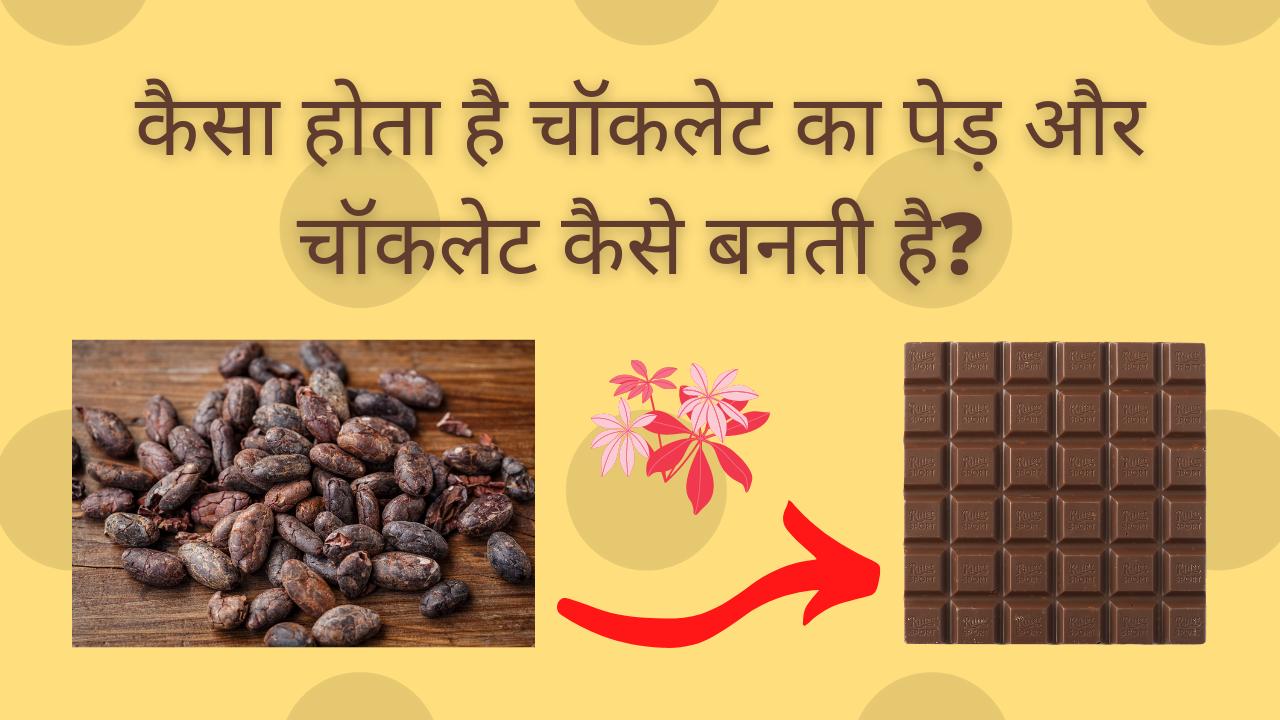 कैसा होता है चॉकलेट का पेड़